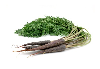 Holländische lila Karotte ist das ganze Jahr verfügbar.
